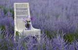 Fototapety wicker chair with jar in Russian Sage
