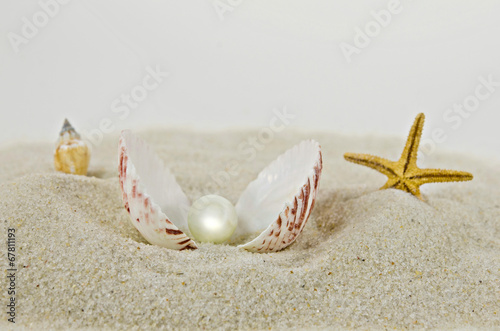 pearl in seashell in sand - 67811193