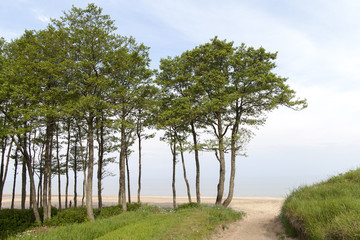 Baltic sea coast.