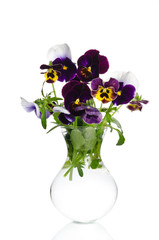 Beautiful pansies in transparent vase isolated on white backgrou