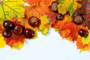 autumn leaves and chestnuts with scpae for your text
