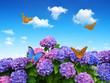 hydrangea with butterflies on blue sky