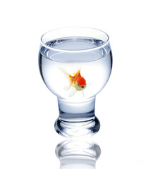 fish in drinking glass