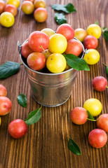 Cherry-Plums in a small bucket
