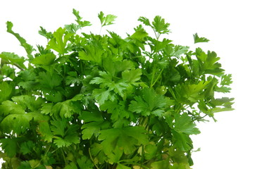 growing  parsley