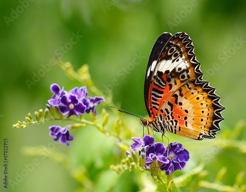 Deurstickers Vlinder Butterfly on a violet flower