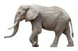 Leinwanddruck Bild - Elefant vor weißem Hintergrund