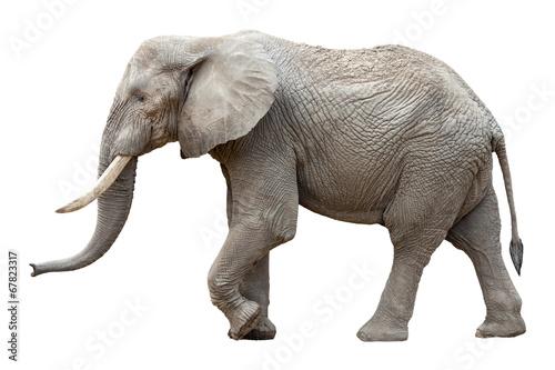 Leinwandbild Motiv Elefant vor weißem Hintergrund