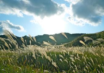 秋 輝く高原 砥峰高原のすすき