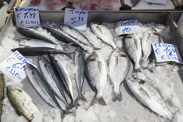 Fresh fishes in a market with greek names and prices