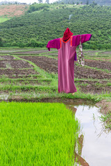 scarecrow lisu Jacket in rice field, Thailand