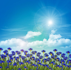 Flowers cornflowers on a background of blue sky with clouds