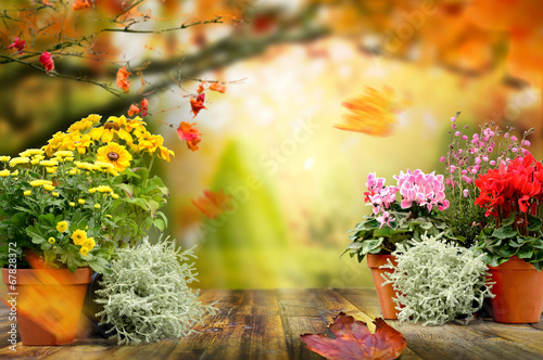 canvas print picture Herbstpflanzen