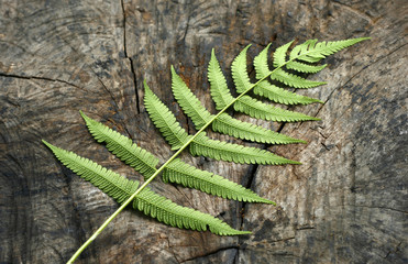 wooden background with green fern