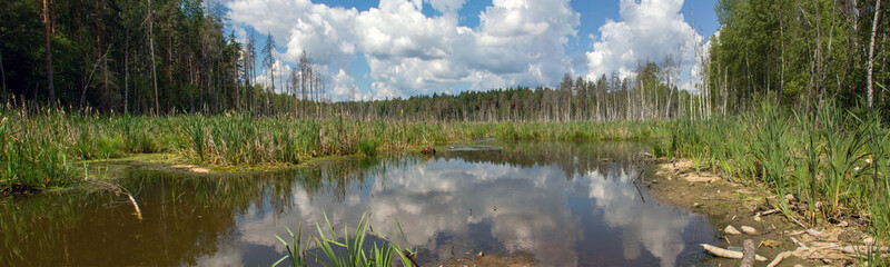 Forest landscape with water