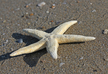 white five-pointed starfish on the beach of the sea in summer 2