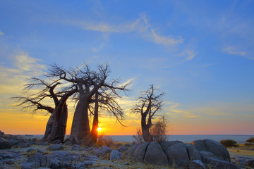 Baobab's at sunrise on Kubu Island