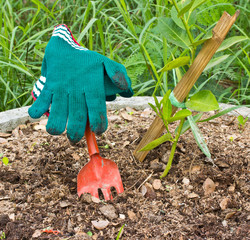 Red fork and green gloves in the garden