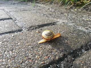 Snail on a sidewalk