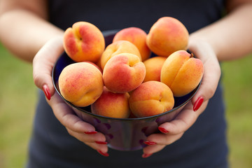 Female hands holding apricots