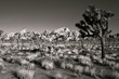 Joshua Tree National Park in Black and White - 67834744