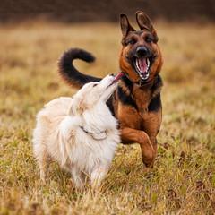 Dogs walking on the field