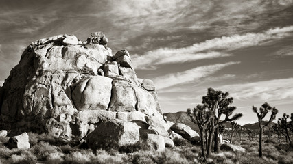 Joshua Tree Park Panorama in Black and White