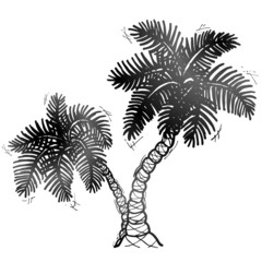 Hand drawn palm tree. Sketch of palm in doodle style