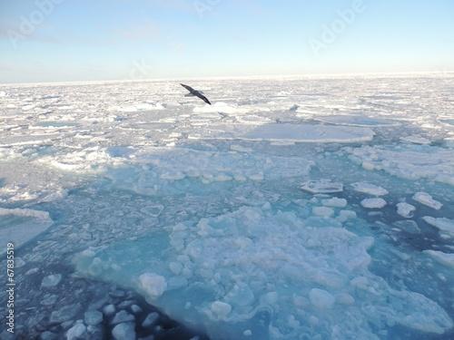 Foto op Plexiglas Antarctica 2 Eismöwe über dem Packeis