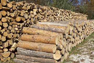 Wood stacked after lumbering