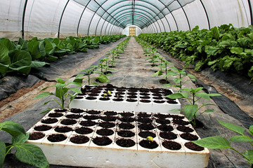Perspective view of a greenhouse