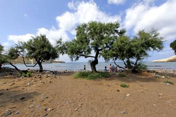 Alberi sulla spiaggia