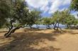 Spiaggia con alberi in Sardegna