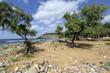 Alberi sulla spiaggia di Santa Caterina
