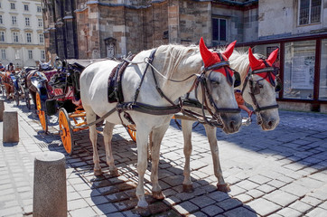 a horse and carriage carries tourists on JULY 4, 2014