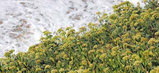 Vegetazione sul mare