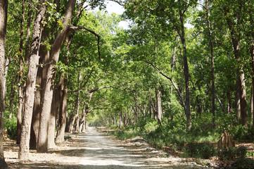 Beautiful dense forest along the dirt road of Jim Corbett
