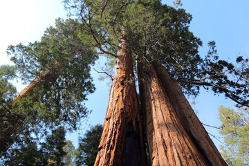 Giant Sequoia National Monument, USA