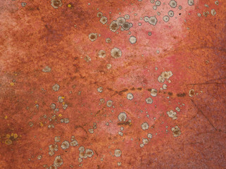 Red Rust and Lichen Abstract