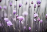 Fototapety Flowering chives