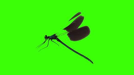 dragonfly flying at green screen chroma key