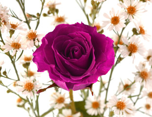 Rose-purple flowers