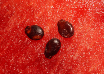 Three seeds of watermelon pulp on closeup