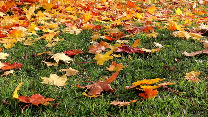Light breeze moving autumn leaves on the grass