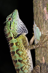 lizard, green and multi colour lizard catching tree in nature