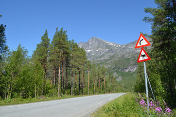 Road in Norwegian pine forest