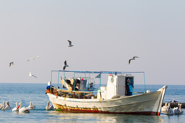 Fishing Boat and the fisherman surrounded by seagulls and pelica