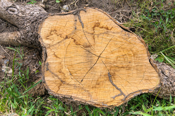 Top view of tree stump