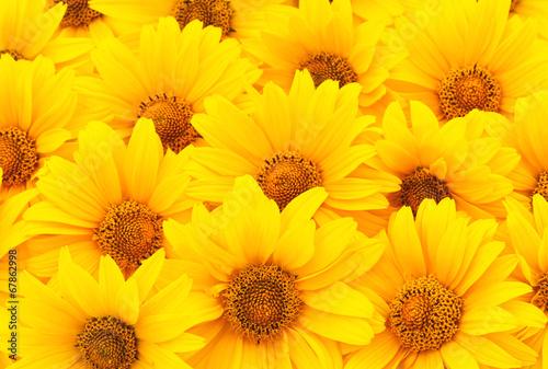 Fotobehang Zonnebloem Sunflowers