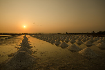 salted farm in Thailand